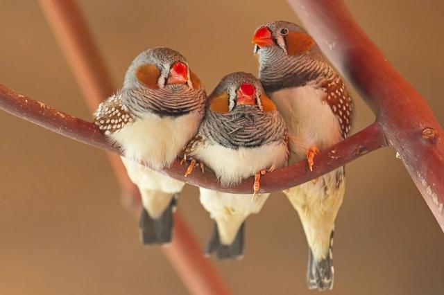 ptaki gryzonie chomiki króliczki Legionowo Nowy Dwór Mazowiecki ZooNemo (15)