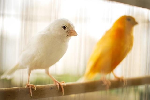 ptaki gryzonie chomiki króliczki Legionowo Nowy Dwór Mazowiecki ZooNemo (19)