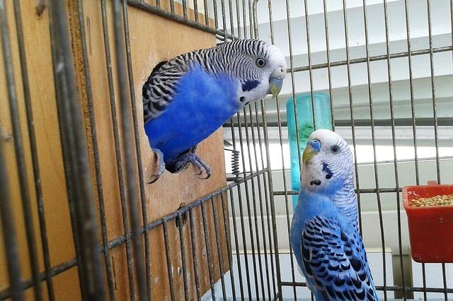 ptaki gryzonie chomiki króliczki Legionowo Nowy Dwór Mazowiecki ZooNemo (20)