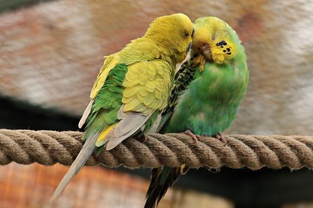 ptaki gryzonie chomiki króliczki Legionowo Nowy Dwór Mazowiecki ZooNemo (21)
