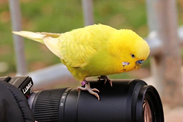 ptaki gryzonie chomiki króliczki Legionowo Nowy Dwór Mazowiecki ZooNemo (22)