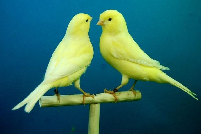 ptaki gryzonie chomiki króliczki Legionowo Nowy Dwór Mazowiecki ZooNemo (25)
