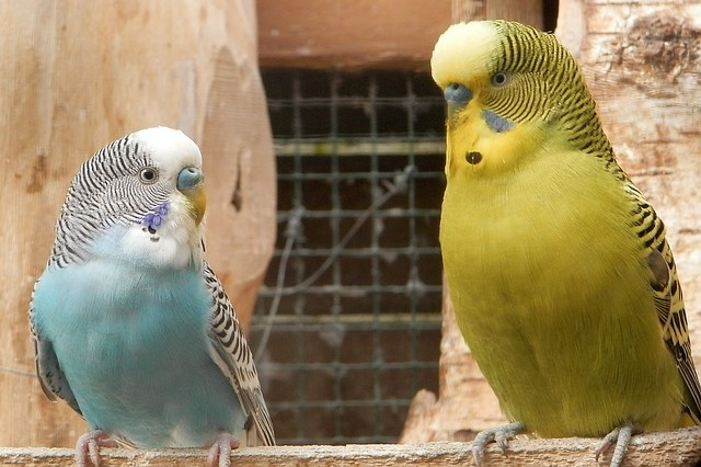 ptaki gryzonie chomiki króliczki Legionowo Nowy Dwór Mazowiecki ZooNemo (5)