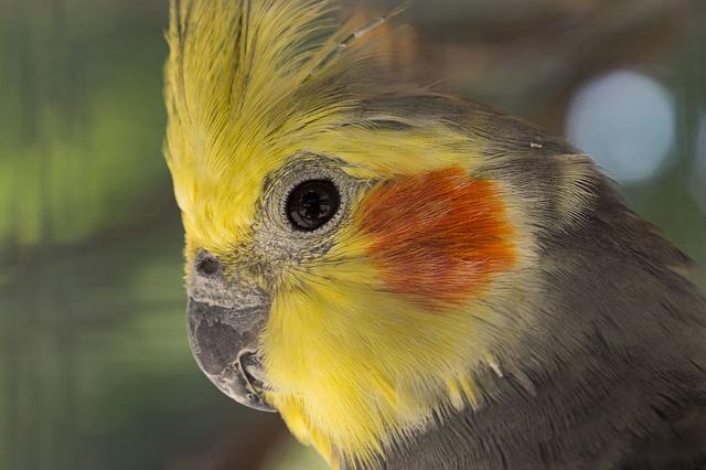 ptaki gryzonie chomiki króliczki Legionowo Nowy Dwór Mazowiecki ZooNemo (6)