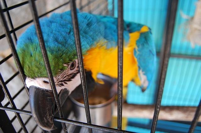 ptaki gryzonie chomiki króliczki Legionowo Nowy Dwór Mazowiecki ZooNemo (7)