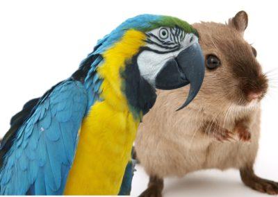 Ptaki, gryzonie…