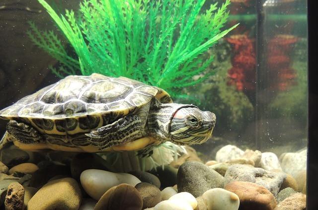 tortoise-980000_640