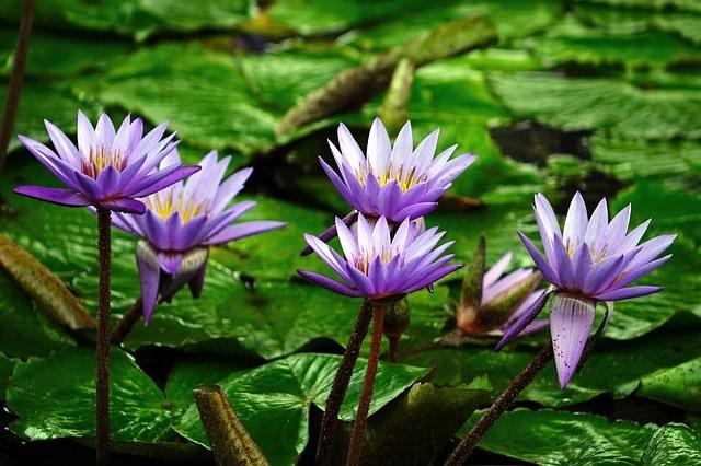 Oczka wodne wyposażenie ryby pokarm filtry rośliny wodne Legionowo Nowy Dwór Mazowiecki ZooNemo (19)