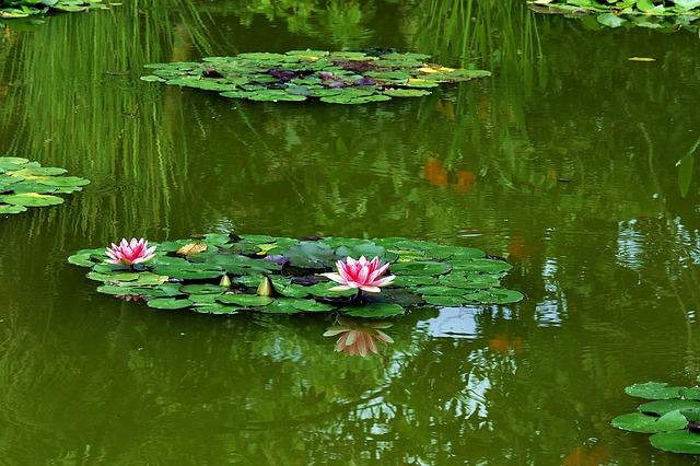 Oczka wodne wyposażenie ryby pokarm filtry rośliny wodne Legionowo Nowy Dwór Mazowiecki ZooNemo (21)