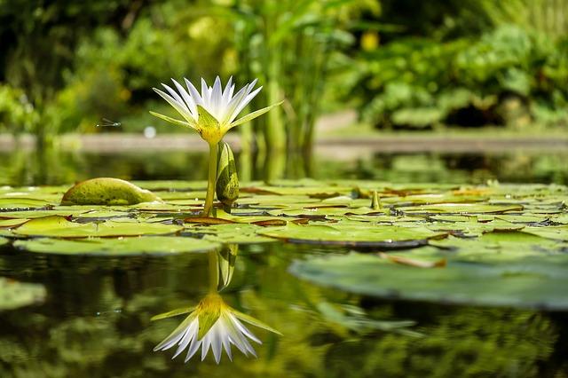 Oczka wodne wyposażenie ryby pokarm filtry rośliny wodne Legionowo Nowy Dwór Mazowiecki ZooNemo (24)