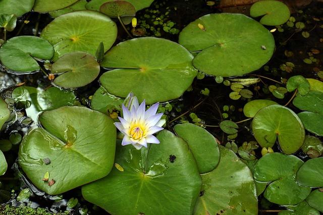 Oczka wodne wyposażenie ryby pokarm filtry rośliny wodne Legionowo Nowy Dwór Mazowiecki ZooNemo (25)