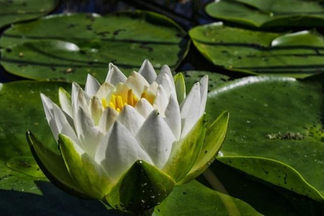 Oczka wodne wyposażenie ryby pokarm filtry rośliny wodne Legionowo Nowy Dwór Mazowiecki ZooNemo (27)