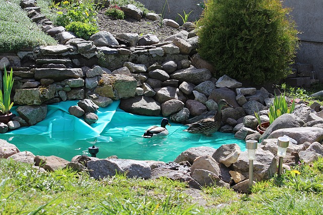 Oczka wodne wyposażenie ryby pokarm filtry rośliny wodne Legionowo Nowy Dwór Mazowiecki ZooNemo (50)