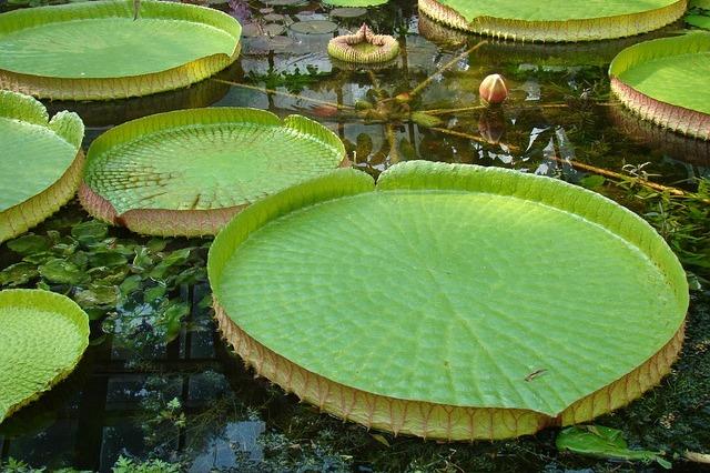 Oczka wodne wyposażenie ryby pokarm filtry rośliny wodne Legionowo Nowy Dwór Mazowiecki ZooNemo (54)