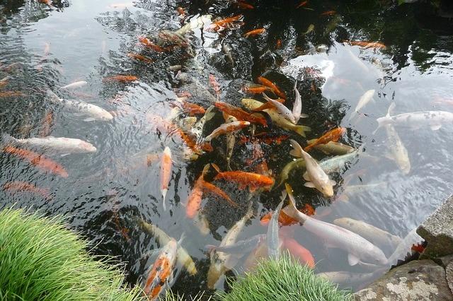Oczka wodne wyposażenie ryby pokarm filtry rośliny wodne Legionowo Nowy Dwór Mazowiecki ZooNemo (63)