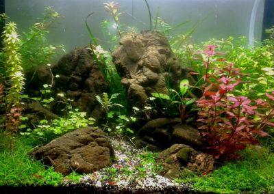 Sieć sklepów ZooLogicznych ZooNemo Legionowo Nowy Dwór Mazowiecki ryby, rośliny, psy, koty (1)