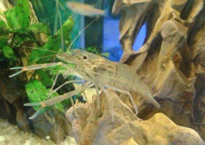 Sieć sklepów ZooLogicznych ZooNemo Legionowo Nowy Dwór Mazowiecki ryby, rośliny, psy, koty (10)