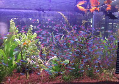 Sieć sklepów ZooLogicznych ZooNemo Legionowo Nowy Dwór Mazowiecki ryby, rośliny, psy, koty (19)