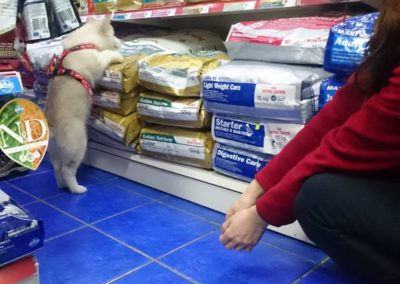 Sieć sklepów ZooLogicznych ZooNemo Legionowo Nowy Dwór Mazowiecki ryby, rośliny, psy, koty (25)