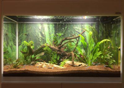 Sieć sklepów ZooLogicznych ZooNemo Legionowo Nowy Dwór Mazowiecki ryby, rośliny, psy, koty (27)