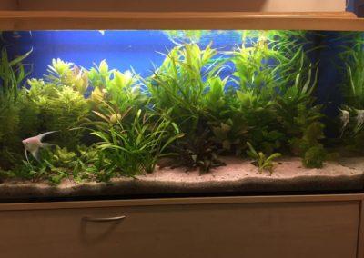 Sieć sklepów ZooLogicznych ZooNemo Legionowo Nowy Dwór Mazowiecki ryby, rośliny, psy, koty (29)