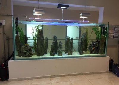 Sieć sklepów ZooLogicznych ZooNemo Legionowo Nowy Dwór Mazowiecki ryby, rośliny, psy, koty (30)