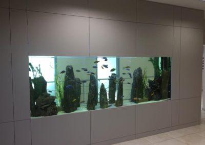 Sieć sklepów ZooLogicznych ZooNemo Legionowo Nowy Dwór Mazowiecki ryby, rośliny, psy, koty (35)