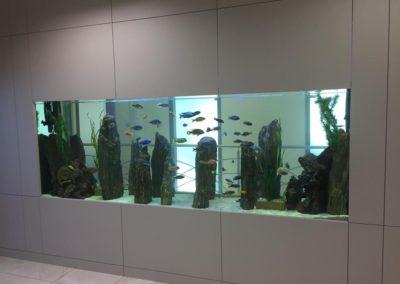 Sieć sklepów ZooLogicznych ZooNemo Legionowo Nowy Dwór Mazowiecki ryby, rośliny, psy, koty (36)