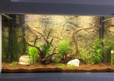 Sieć sklepów ZooLogicznych ZooNemo Legionowo Nowy Dwór Mazowiecki ryby, rośliny, psy, koty (38)