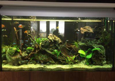 Sieć sklepów ZooLogicznych ZooNemo Legionowo Nowy Dwór Mazowiecki ryby, rośliny, psy, koty (41)