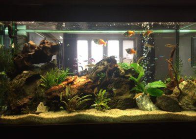 Sieć sklepów ZooLogicznych ZooNemo Legionowo Nowy Dwór Mazowiecki ryby, rośliny, psy, koty (42)