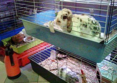 Sieć sklepów ZooLogicznych ZooNemo Legionowo Nowy Dwór Mazowiecki ryby, rośliny, psy, koty (44)