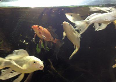 Sieć sklepów ZooLogicznych ZooNemo Legionowo Nowy Dwór Mazowiecki ryby, rośliny, psy, koty (45)