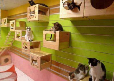 Sieć sklepów ZooLogicznych ZooNemo Legionowo Nowy Dwór Mazowiecki ryby, rośliny, psy, koty (48)