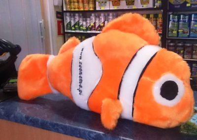 Sieć sklepów ZooLogicznych ZooNemo Legionowo Nowy Dwór Mazowiecki ryby, rośliny, psy, koty (5)