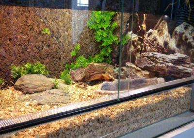 Sieć sklepów ZooLogicznych ZooNemo Legionowo Nowy Dwór Mazowiecki ryby, rośliny, psy, koty (50)