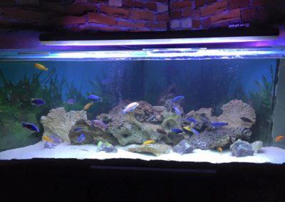 Sieć sklepów ZooLogicznych ZooNemo Legionowo Nowy Dwór Mazowiecki ryby, rośliny, psy, koty (52)
