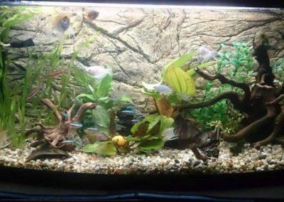 Sieć sklepów ZooLogicznych ZooNemo Legionowo Nowy Dwór Mazowiecki ryby, rośliny, psy, koty (57)