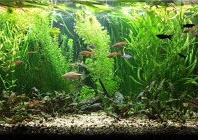 Sieć sklepów ZooLogicznych ZooNemo Legionowo Nowy Dwór Mazowiecki ryby, rośliny, psy, koty (58)