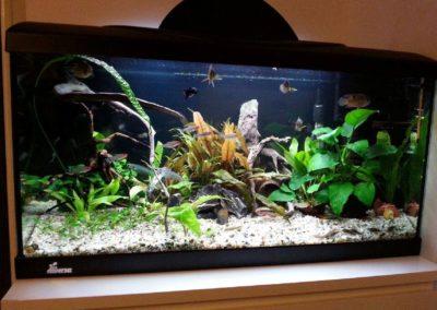 Sieć sklepów ZooLogicznych ZooNemo Legionowo Nowy Dwór Mazowiecki ryby, rośliny, psy, koty (64)