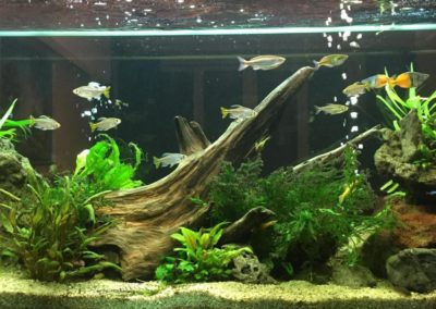 Sieć sklepów ZooLogicznych ZooNemo Legionowo Nowy Dwór Mazowiecki ryby, rośliny, psy, koty (65)