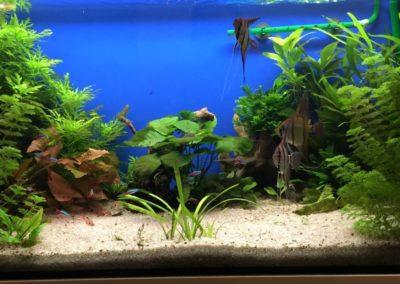 Sieć sklepów ZooLogicznych ZooNemo Legionowo Nowy Dwór Mazowiecki ryby, rośliny, psy, koty (66)
