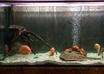 Sieć sklepów ZooLogicznych ZooNemo Legionowo Nowy Dwór Mazowiecki ryby, rośliny, psy, koty (67)