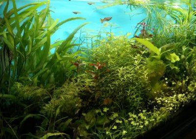 Sieć sklepów ZooLogicznych ZooNemo Legionowo Nowy Dwór Mazowiecki ryby, rośliny, psy, koty (72)