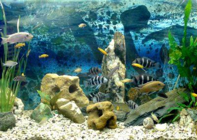 Sieć sklepów ZooLogicznych ZooNemo Legionowo Nowy Dwór Mazowiecki ryby, rośliny, psy, koty (73)