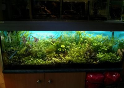 Sieć sklepów ZooLogicznych ZooNemo Legionowo Nowy Dwór Mazowiecki ryby, rośliny, psy, koty (75)