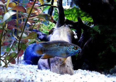 Sieć sklepów ZooLogicznych ZooNemo Legionowo Nowy Dwór Mazowiecki ryby, rośliny, psy, koty (77)