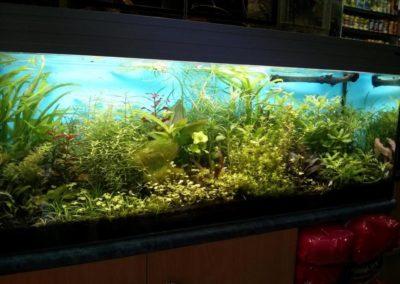 Sieć sklepów ZooLogicznych ZooNemo Legionowo Nowy Dwór Mazowiecki ryby, rośliny, psy, koty (78)