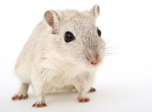 Zobacz jak myszka, może wykorzystać kołowrotek?