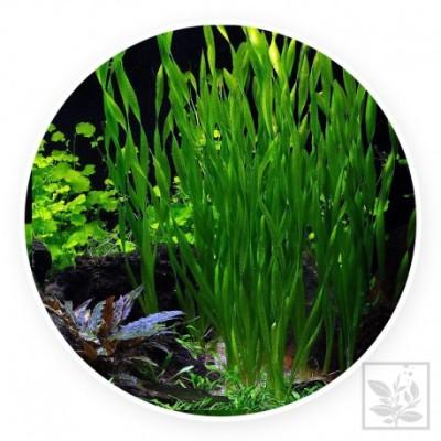ryby i rośliny ZooNemo 12